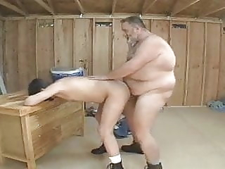 daddy bear sex older fat bear big cock daddy